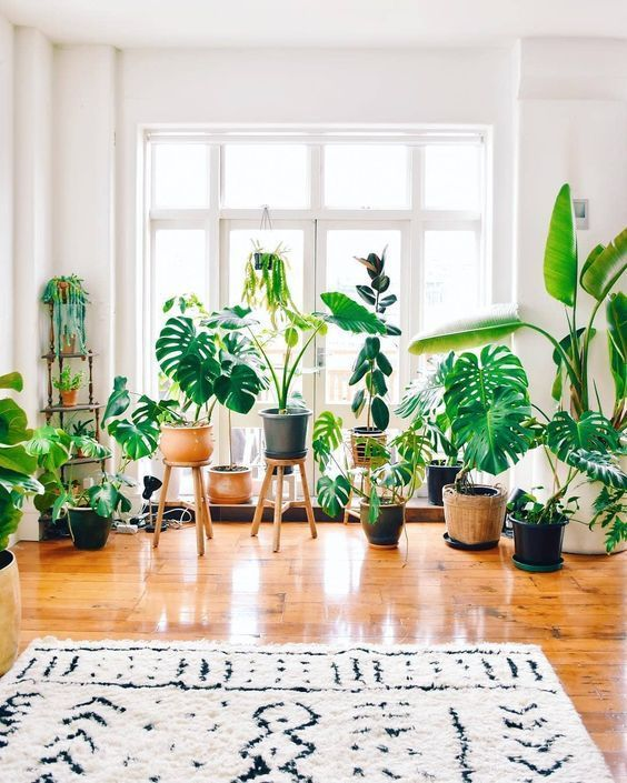 Spring Trends: Create Your Own Indoor Jungle! indoor jungle Summer Trends: Create Your Own Indoor Jungle! 4 10