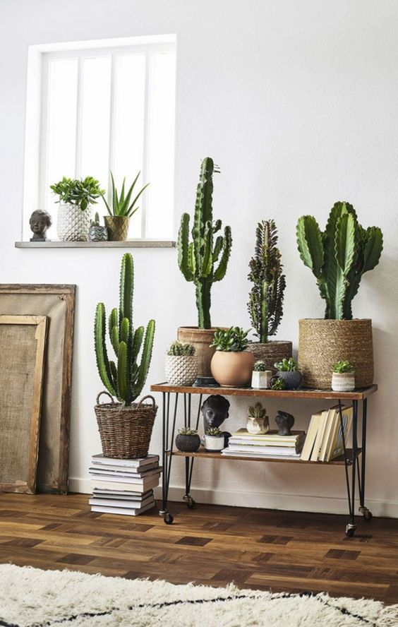Spring Trends: Create Your Own Indoor Jungle! indoor jungle Summer Trends: Create Your Own Indoor Jungle! 5 9